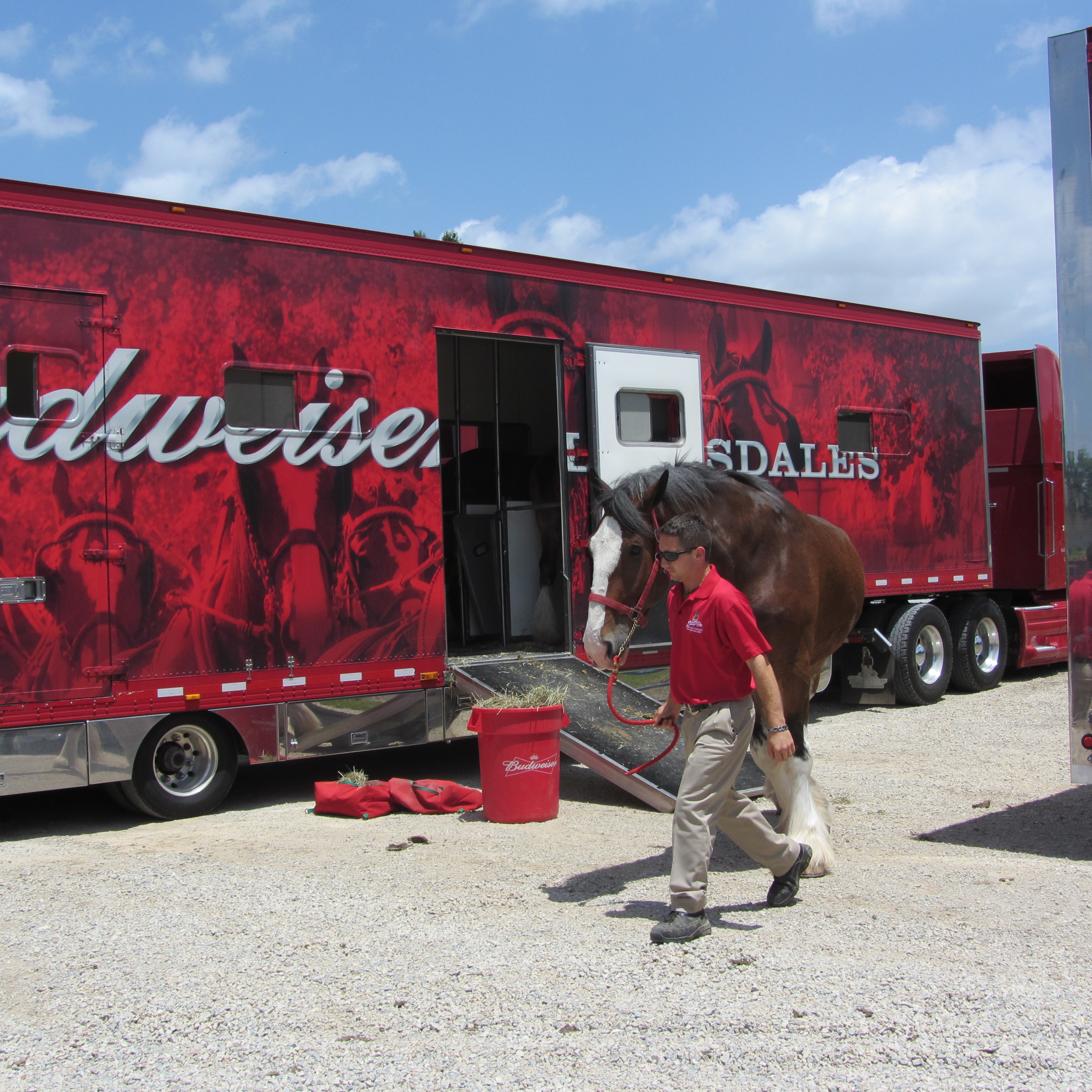 Beautiful Clydesdales